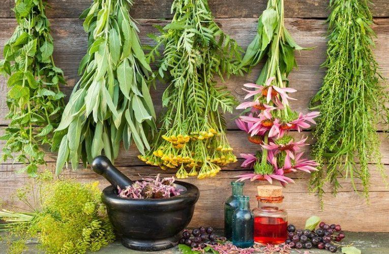 Топ самых распространенных лечебных трав